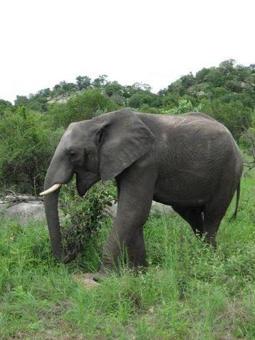 An Elephant's Tale at Fishhawk Lake, Trumpeting Through My ...