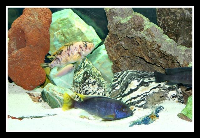 fishtank 2013-11-04 21.37.55