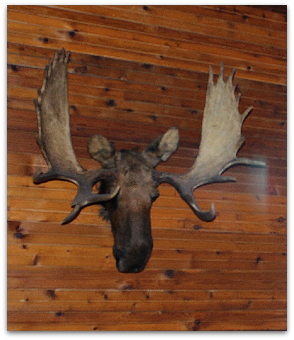 Bullwinkle Finds a New Home