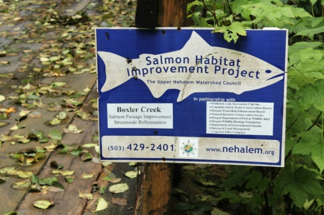 Salmon Habitat Project Boxler Creek at Fishhawk Lake