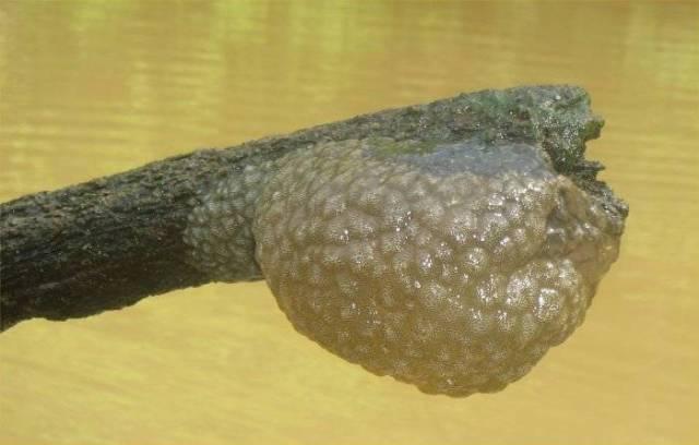 Bryozoans