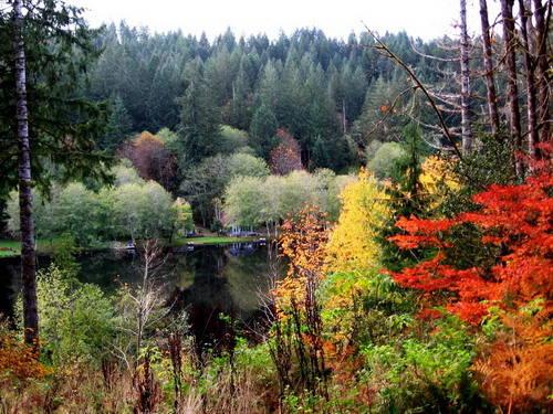 fall on Fishhawk Road Schoenky lot