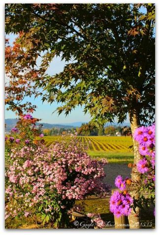 montinore-vineyard-flowers