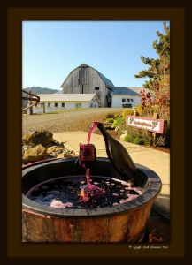Plum Hiil Winery Photo by Gayle Rich-Boxman